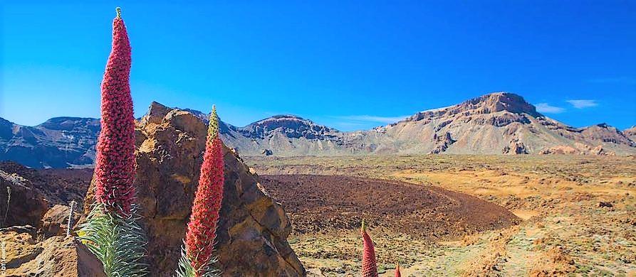 voyage canaries, séjours et hôtels pas cher à Tenerife