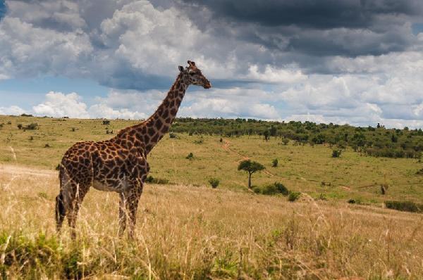 Combiné safari hakuna matata et jacaranda indian ocean beach hôtel 4*
