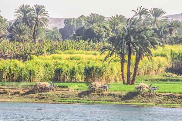 Rêverie sur le Nil & Albatros Aqua Blu